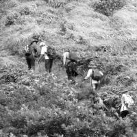 険しい山道を登る参加者達