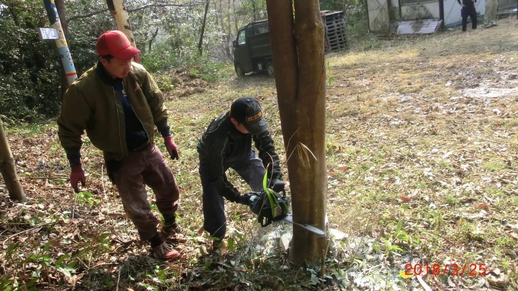 立木伐採実習